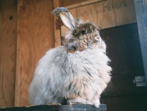 rabbits1